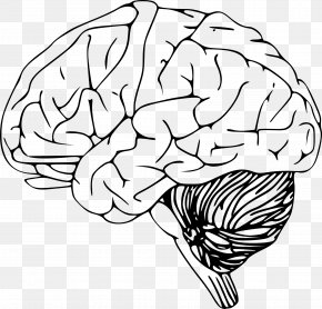 Human Brain - Outline Of The Human Brain Clip Art PNG