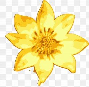 Daisy - Ethiopia Flower Meskel Common Daisy Clip Art PNG
