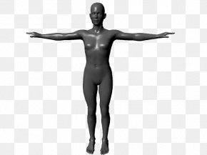 Full Body - Human Body Homo Sapiens Anatomy 3D Computer Graphics Physiology PNG