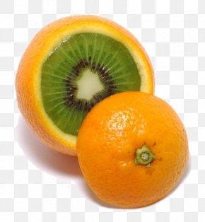 Orange - Clementine Tangelo Mandarin Orange Tangerine Fruit Salad PNG