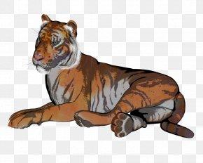 Tiger - Tiger Lion Drawing Illustration Whiskers PNG