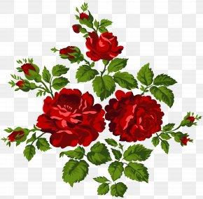 Vintage Roses Clip Art Image - Garden Roses Centifolia Roses Clip Art PNG