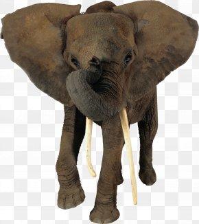 Elephant - African Elephant Indian Elephant Animal PNG