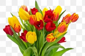 Tulips Photos - Tulip Mothers Day Flower Bouquet Childrens Day Fathers Day PNG