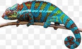 Lizard - Lizard Reptile Chameleons Green Iguana PNG