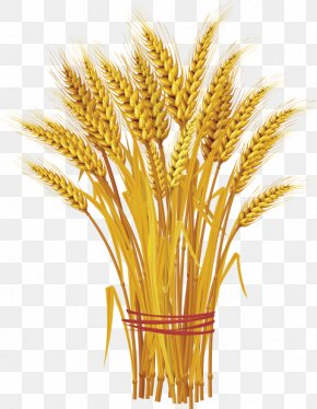 Wheat - Vector Graphics Wheat Clip Art Ear Cereal PNG