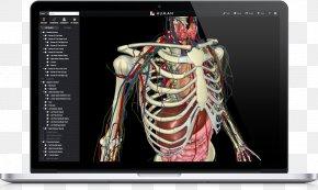 The Anatomy Of A Body Medicine - Atlas Der Anatomie Des Menschen Human Anatomy & Physiology Human Body PNG