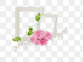 White Frame - Film Frame Picture Frame PNG