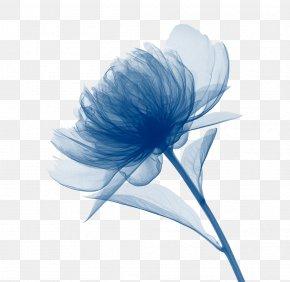 Chrysanthemum Decorative Patterns - Canvas Print Art Watercolor Painting PNG