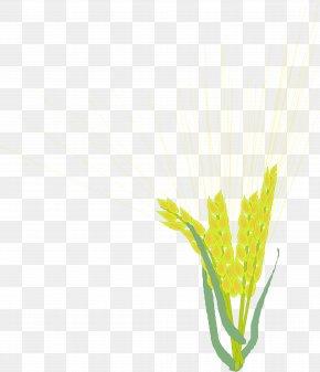 Barley,Rice,paddy,Rice,paddy,food - Rice Barley PNG