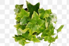 Plane Leaf Vegetable - Green Leaf Watercolor PNG