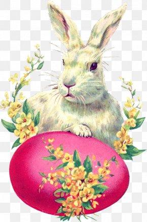 Easter - Easter Bunny Easter Postcard Rabbit Easter Egg PNG