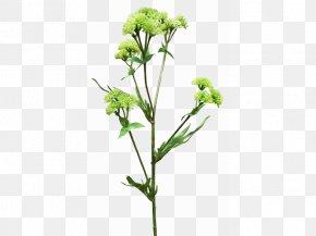 Plant Flowers Material - Cut Flowers Flora Plant Stem Subshrub Flowering Plant PNG