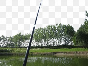 Wild Fishing Rod - Angling Fishing Rod Recreation PNG