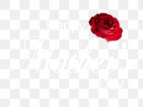 HAPPY MOTHERS DAY - Cut Flowers Garden Roses Centifolia Roses Rosaceae PNG