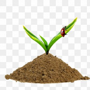 Grass Sprout PNG