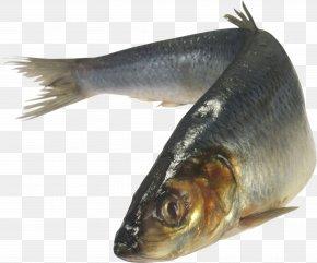 Fish - Atlantic Herring Zakuski Vorschmack Fish As Food Japanese Pilchard PNG