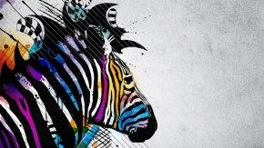 Zebra - Desktop Wallpaper High-definition Video 1080p High-definition Television Display Resolution PNG