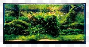 Aquarium - Aquariums Siamese Fighting Fish Aquascaping Nature PNG