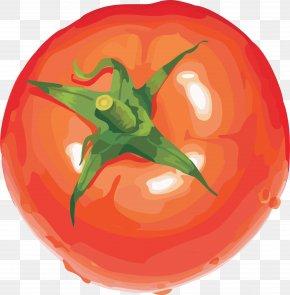 Tomato Image - Vegetable Tomato Fruit Clip Art PNG