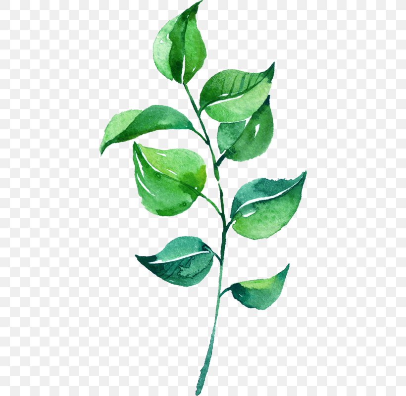 Leaf Watercolor Painting, PNG, 420x800px, Leaf, Branch, Green, Painting, Photography Download Free