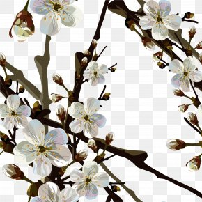 Spring - Cherry Blossom Wallpaper PNG