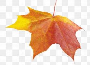 Autumn Leaf - Maple Leaf Icon PNG