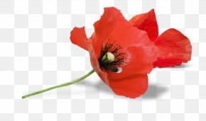 South Australia Armistice Day Remembrance Poppy Anzac Day PNG