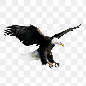 Flying Eagle - Bald Eagle Hawk Falconiformes PNG