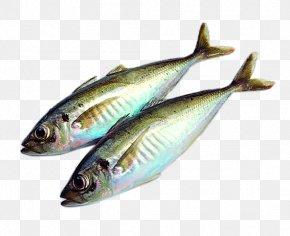 Japanese Tuna - Fish Food Drying Clip Art PNG