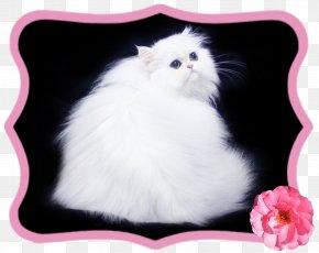 Kitten - Whiskers Norwegian Forest Cat Kitten Domestic Long-haired Cat Siberian Cat PNG
