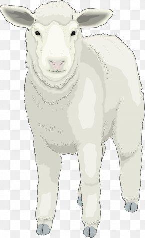 Fluffy Little Sheep - Sheep Clip Art PNG