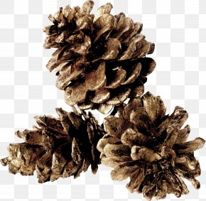 Gray Pine Cones - Pine Conifer Cone Table PNG