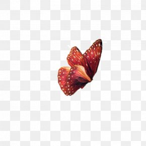 Butterfly,insect,specimen - Butterfly Insect Clip Art PNG