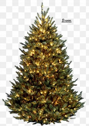 Christmas Tree Free Image - Vatican Christmas Tree Fraser Fir Artificial Christmas Tree PNG