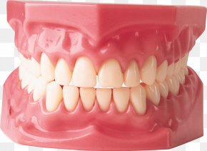 Teeth Image - Gums Dentistry Human Tooth Dentures PNG