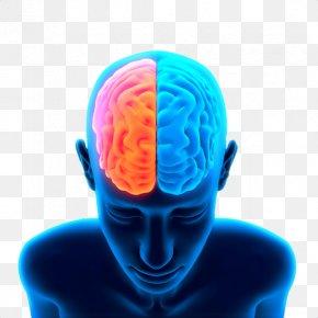 Brain Free Image - Brain Clip Art PNG