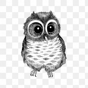 Black And White Line Drawing Big Eyes Owl - Owl Drawing Bird Black And White Photography PNG