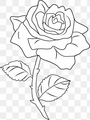Black And White Roses Pictures - Line Art Drawing Rose Coloring Book Clip Art PNG