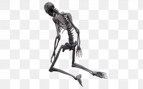 Skeleton - Human Skeleton Homo Sapiens Skull Endoskeleton PNG