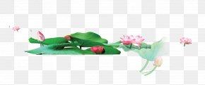 Lotus - Petal Graphic Design Flora Illustration PNG