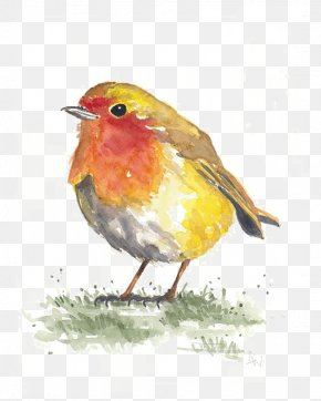 Birds - Bird Watercolor Painting Paper Drawing PNG