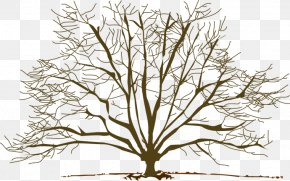 Fall Trees Clipart - Tree Winter Branch Clip Art PNG