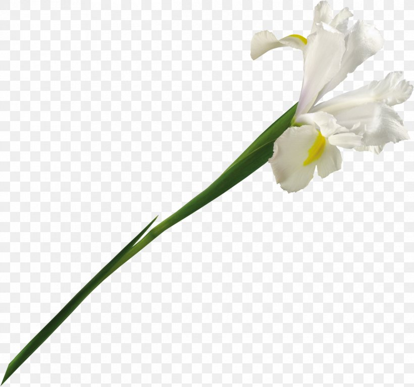 Clip Art, PNG, 1245x1166px, Software, Archive File, Bud, Cut Flowers, Flora Download Free
