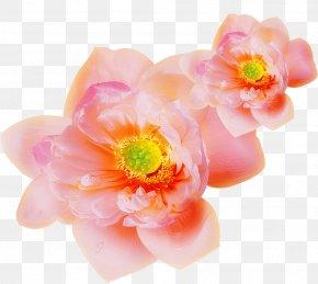 Pink Floral Design - Pink Clip Art PNG