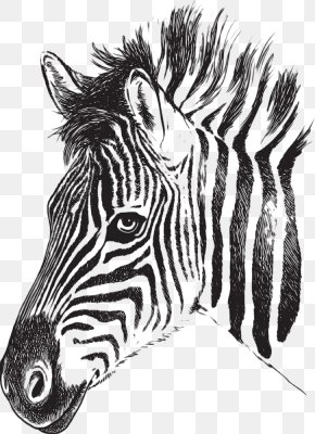 Zebra Picture - Zebra Drawing Stripe Clip Art PNG