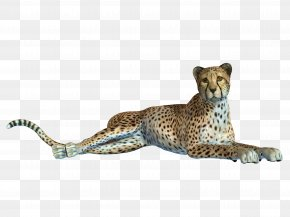 Creative Pull The Tummy Leopard Free - Cheetah Leopard Jaguar Black Panther PNG