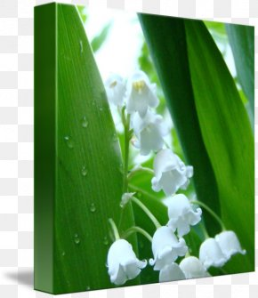 Lily Of The Valley - Flower Printmaking Fine Art Work Of Art PNG