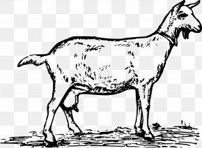 Milk - Anglo-Nubian Goat Toggenburg Goat Boer Goat Pygmy Goat Black Bengal Goat PNG