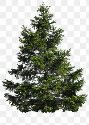 Tree Image Download Picture - Pine Tree Clip Art PNG